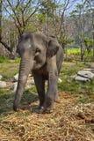 Słoń i jej dziecko Zdjęcia Royalty Free