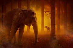 Słoń i niektóre zwierzę wtykający w ogieniach Obrazy Stock