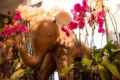 Słoń i orchidee Zdjęcia Royalty Free