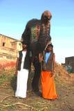 Słoń India Zdjęcia Royalty Free