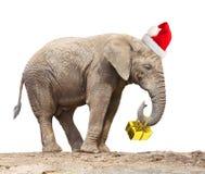 Słoń jako Santa Obrazy Stock