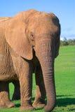 słoń kobieta obraz royalty free
