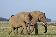 Słoń matka i łydka Zdjęcia Royalty Free