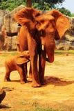 Słoń. Matka z dziecko słoniami Chodzi Outdoors. Zdjęcie Royalty Free