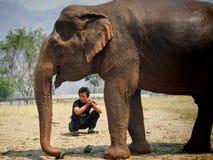 Słoń natury park Zdjęcie Royalty Free