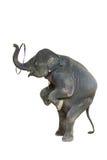słoń odizolowane Obrazy Stock