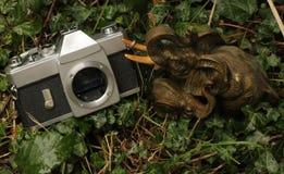 Słoń odtransportowywa kamerę cmentarz fotografia stock
