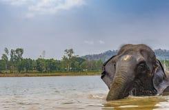 Słoń po skąpania - wstający od rzeki zdjęcia royalty free