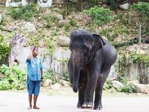 Słoń podwyżki przodu noga podąża w górę mahout ciała lanquage Fotografia Stock