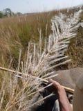 Słoń przejażdżka zdjęcie stock