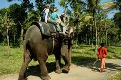 słoń przejażdżka Fotografia Stock