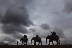 Słoń przejażdżka Zdjęcie Royalty Free