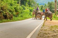Słoń przejażdżka w wioski Chiang Mai, Tajlandia zdjęcie royalty free