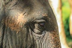 Słoń przejażdżka, zwierzę Obrazy Stock