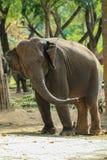 Słoń przejażdżka, zwierzę Zdjęcie Stock