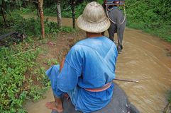 Słoń przejażdżki Phuket wyspa Tajlandia Zdjęcie Royalty Free