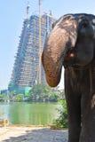 Słoń przy ruchliwie miastem Zdjęcie Stock