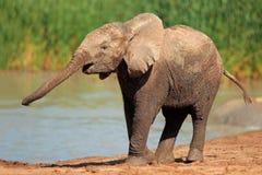 Słoń przy Waterhole Zdjęcia Royalty Free