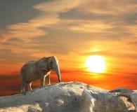 Słoń przy zmierzchem fotografia stock