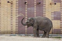 Słoń przy zoo Obraz Stock