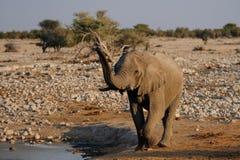 Słoń przychodzi waterhole Obraz Stock