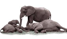 słoń rodziny Obrazy Stock