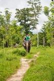 Słoń, słoń przejażdżka, - Bangpa safari w pięknym lasowym conv Zdjęcia Royalty Free
