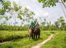 Słoń, słoń przejażdżka, - Bangpa safari w pięknym lasowym conv Obrazy Stock