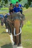 Słoń, słoń przejażdżka, zwierzę Zdjęcie Stock