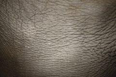 słoń skóra Zdjęcie Royalty Free