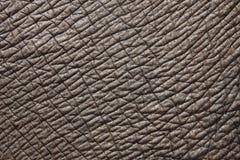 Słoń skóra zdjęcie stock