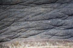 Słoń skóra Obraz Stock