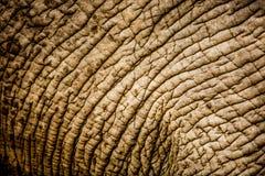 Słoń skóra Fotografia Stock
