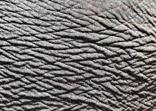Słoń skóra, zakończenie Zdjęcie Stock