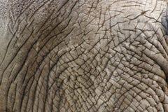 słoń skóry Zdjęcie Stock