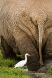 słoń skała Obrazy Royalty Free