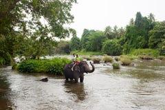 Słoń, Sri Lanka Zdjęcia Royalty Free