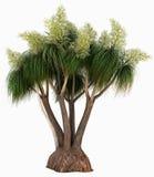 Słoń stopy palma Obraz Stock