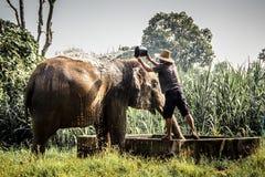 Słoń Tajlandzki Obrazy Royalty Free