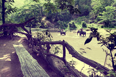Słoń trekking przez dżungli w Tajlandia zdjęcia stock