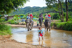 Słoń trekking w Tajlandia zdjęcie royalty free