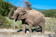 Słoń w dżungli Obraz Royalty Free