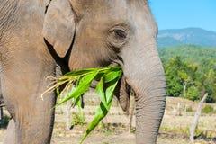 Słoń w dżungli Obrazy Royalty Free