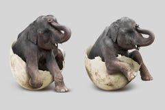Słoń w eggshell Fotografia Royalty Free