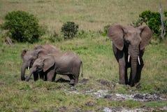 Słoń w Masai Mara Kenja Afryka obraz royalty free