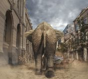 Słoń w miasteczku budzi się samochód fotografia royalty free