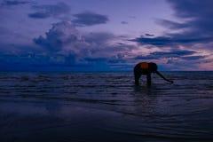 Słoń w morzu Zdjęcie Royalty Free