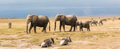 Słoń w parku narodowym Kenja zdjęcia stock