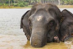 Słoń w rzecznym skąpaniu obraz royalty free