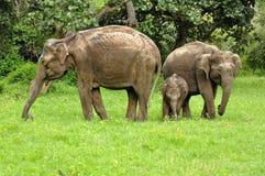 Słoń w safari India zdjęcie stock